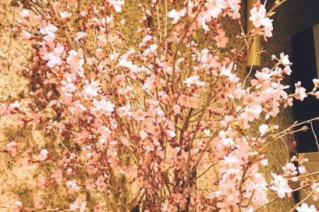 春爛漫「さくらまつり」のご案内